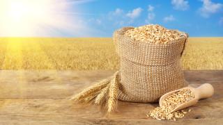 Очаква се по-богата реколта от пшеница и царевица в света