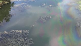 Екоинспекцията проверява сигнал за оцветяване в зелено на река Цибрица