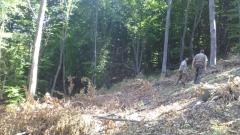 Над 560 отсечени дървета откриха в землището на ботевградско село