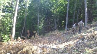 """Заловиха двама румънци при незаконна сеч на наш остров в """"Дунав"""""""