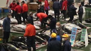 COVID-19 удари и пазара на риба тон