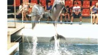 Дечица кръстиха най-малко делфинче във варненския делфинариум