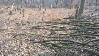 Пловдивчани негодуват срещу масова сеч в парк