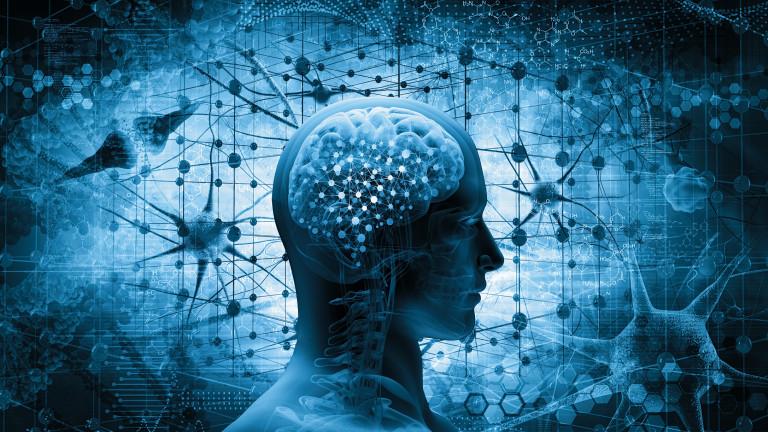 Човешкият мозък е най-сложният апарат, познат на науката, за чиято