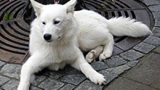 Компания изобрети пералня задестваща се от кучешки лай