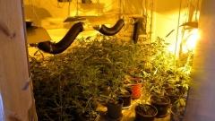 66 саксии и сушилня за марихуана откриха в с. Вуково