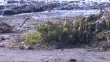 Идентифицираха и петата жертва на наводнението в Бургаско
