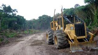 Фирма купува безценна гора срещу малко захар и сол
