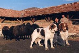 Ваксинират срещу бяс кучетата в София