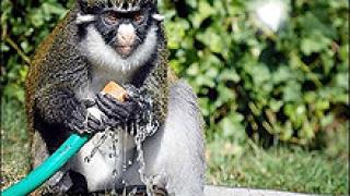 200 животни от столичния зоопарк – с основители