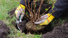 83 % от степно-храстовите екосистеми у нас са в добро или много добро състояние