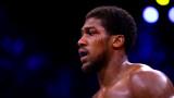Boxingnews24.com: Джошуа ще избере да се бие срещу Пулев, защото ще му бъде по-лесно