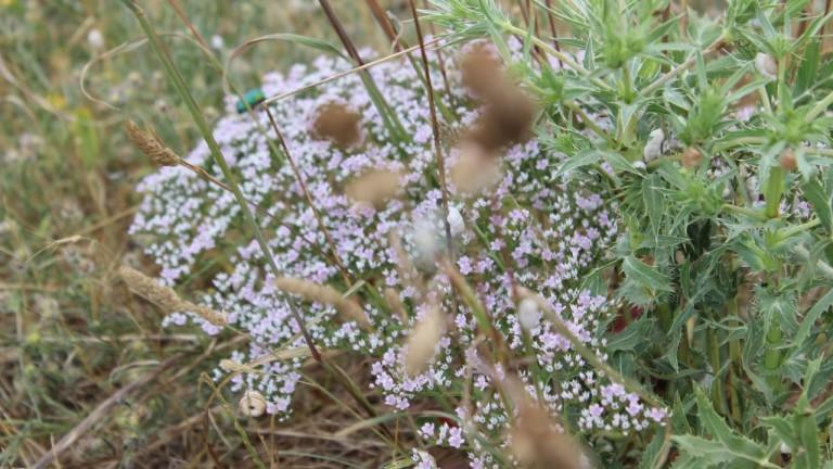 Теренен мониторинг показва самовъзстановяване на понто-сарматски степи в района на