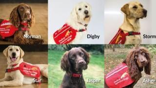 Британски учени изследват дали кучета могат да откриват COVID-19
