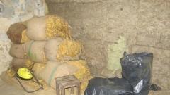 Граничари разбиха група за нелегална обработка и продажба на тютюн