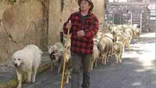 Парите за земеделие трудно стигат до истинските фермери