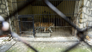 """""""Четири лапи"""" призовава ЕК да провери условията в зоопарковете ни"""