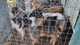 Зоозащитници от Сливен се скараха заради кучешки приют
