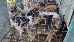 Врачанско село протестира срещу незаконен кучкарник