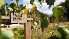"""Природен парк """"Витоша"""" става дом на 350 дръвчета"""