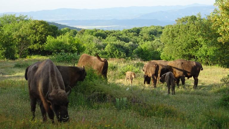 Още едно зубърче се роди в Източните Родопи, съобщават от