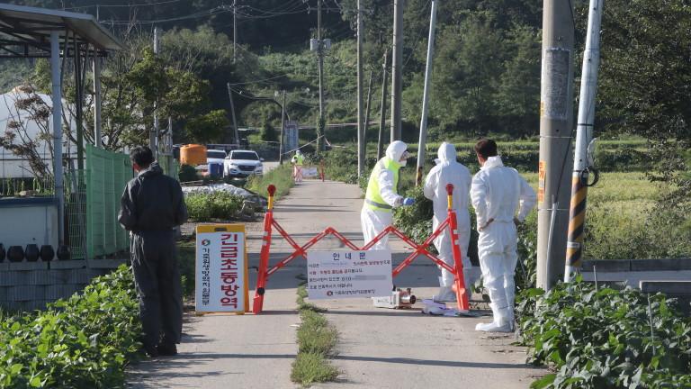 Южна Корея е най-новата страна, засегната от смъртоносна африканска чума