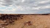 Незаконно депо изхвърля стари гуми в защитен биорезерват в Бургас