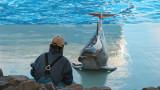 Умението, което притежават само хората и делфините