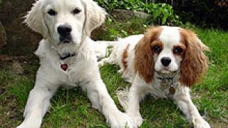Направиха специална алея за домашни кучета в Плевен