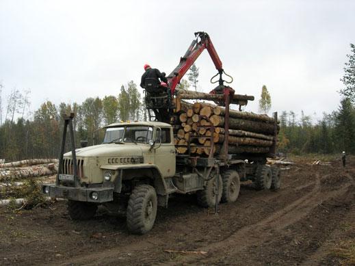 Еколози: Фирми на ДПС безогледно изсичат Средна гора