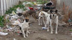 В Русе, София, Бургас и Стара Загора  осиновяват най-много бездомни кучета