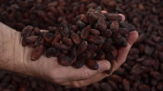 Цената на какаото в Европа удари над годишно дъно