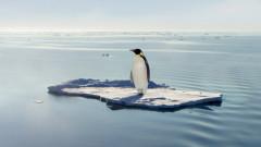 Хиляди малки на императорски пингвини загинаха в Антарктика