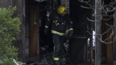 Осем ранени и изчезнал тръбозъб след пожара в лондонския зоопарк