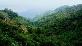 Колумбия унищожи рекордна площ с насаждения с кока за година