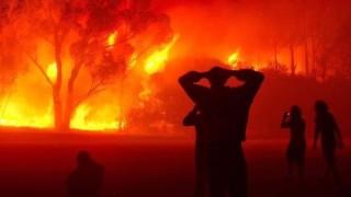 Горски пожари пометоха Алжир, има 42 загинали, включително войници