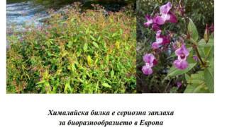 """Инвазията на красивите """"полезни"""" растения"""