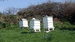Изтича срокът на заявките за подпомагане на пчеларите