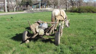 Арестуваха два коня, изоставени от бракониери в Берковица