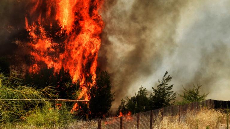 Голям пожар бушува на Пелопонес, има изгорели къщи