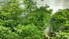 Разкриха модерна лаборатория за марихуана в Луковит