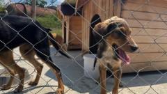 Увеличава се броят на осиновените кучета от приюта в Ямбол