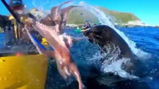 Каякар получи шамар от октопод, захапан от тюлен край Нова Зеландия