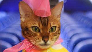 Котката, на която има за какво да завиждаме