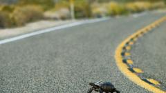 Шефът на Джилингам наел детектив да му търси костенурката