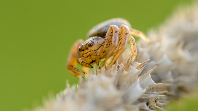 Паяците могат да летят