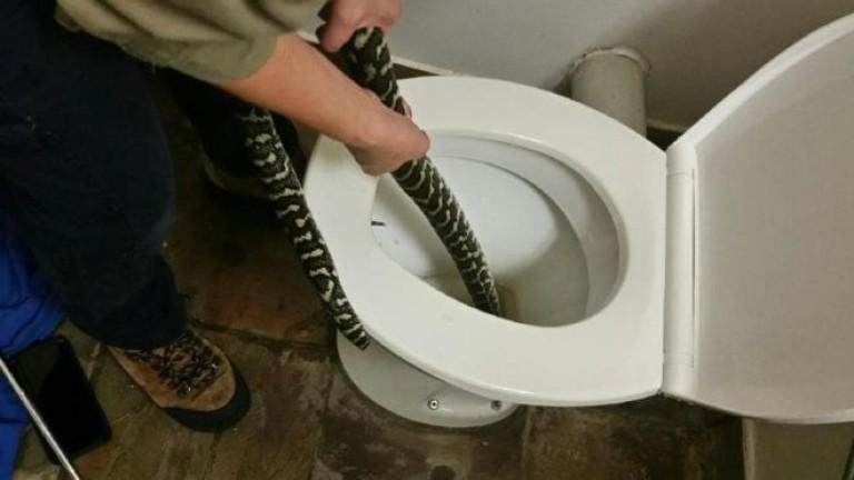 Снимка: Жена в Австралия ухапана от змия, докато седяла на тоалетната чиния