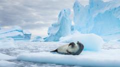 Езеро от лава се появи в Антарктика