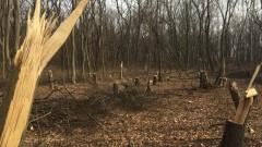 14 хил. проверки за незаконна дървесина в цялата страна