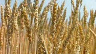 Покриват 75% от щетите на земеделците до края на месеца